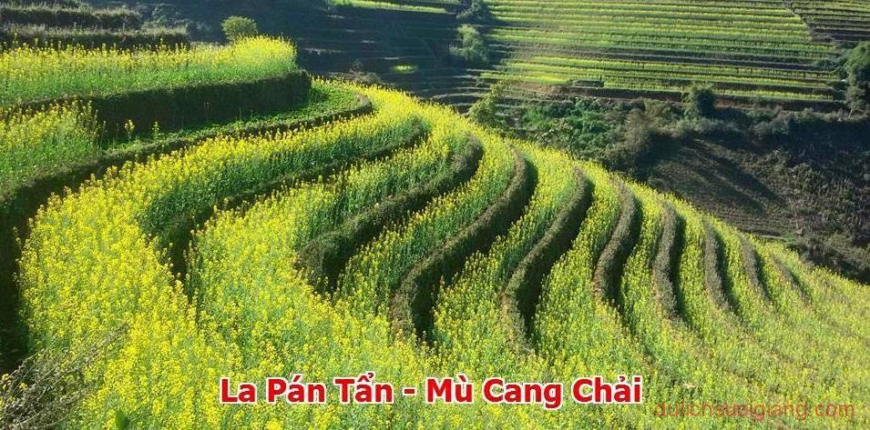 nhung-diem-checkin-hoa-cai-so-deep-tai-mu-cang-chai-7