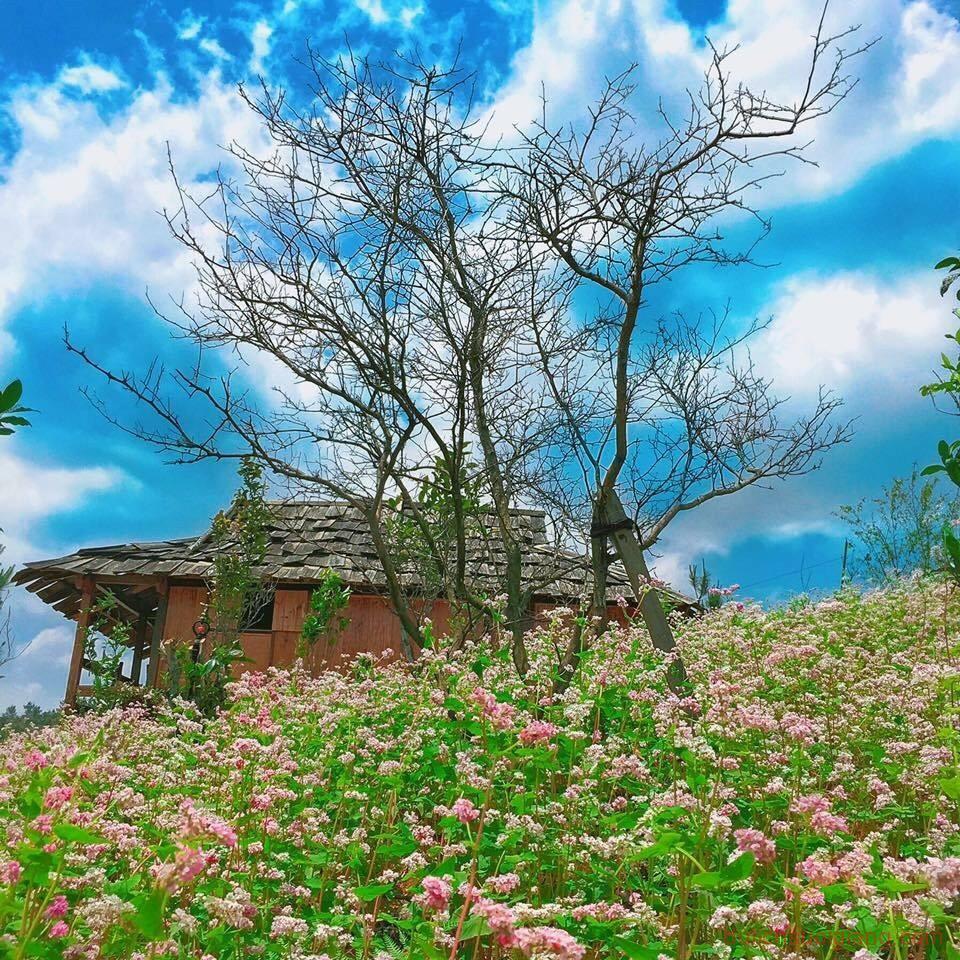 kham-pha-Ecolodge Mucangchai-diem-du-lich-nghi-duong-hot-nhat-tai-mu-cang-chai-24