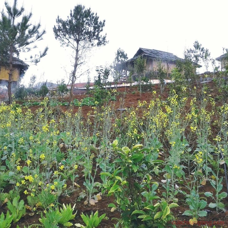 kham-pha-Ecolodge Mucangchai-diem-du-lich-nghi-duong-hot-nhat-tai-mu-cang-chai-36