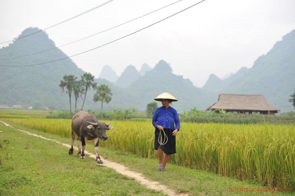 kham-pha-xoi-farmstay-luc-yen-yen-bai (29)