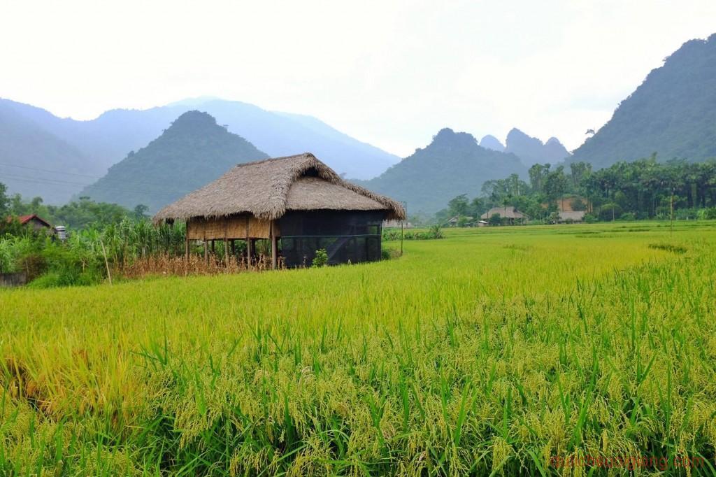 kham-pha-xoi-farmstay-luc-yen-yen-bai (5)