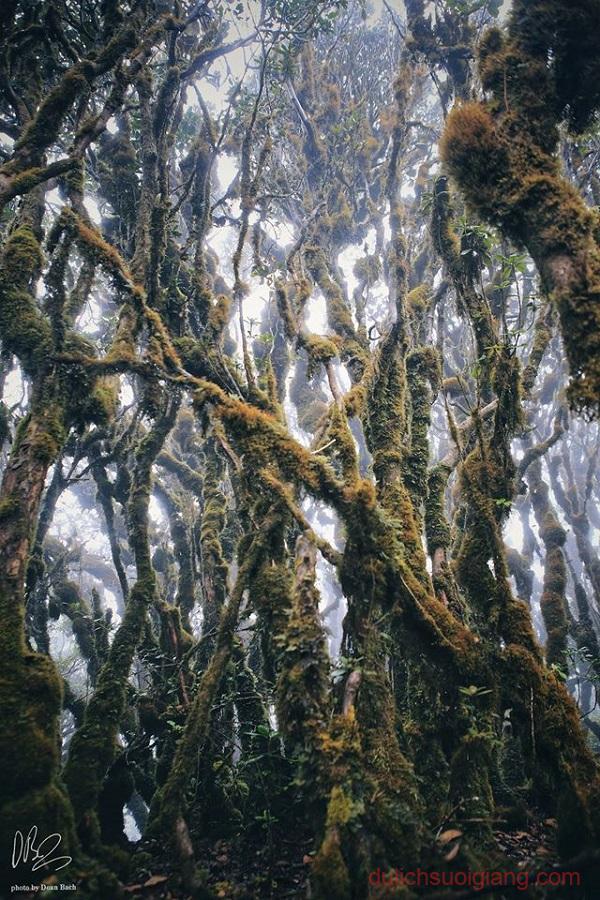 trekking-ta-xua-tram-tau-yen-bai (26)