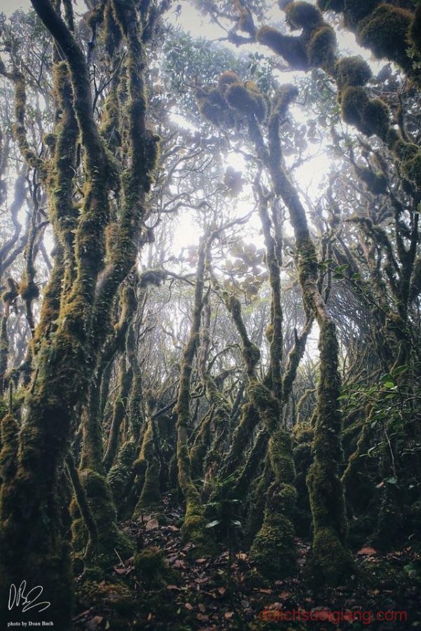 trekking-ta-xua-tram-tau-yen-bai (28)