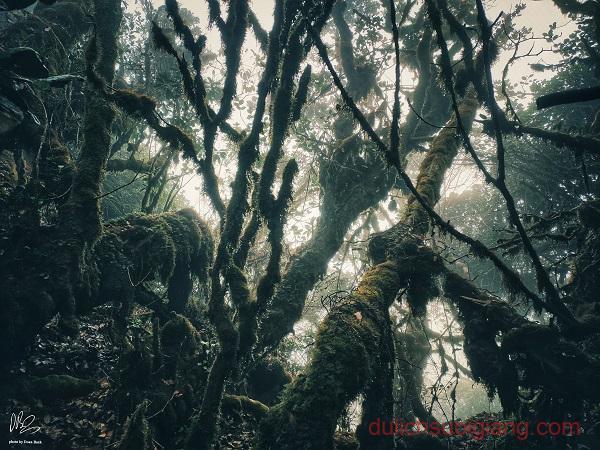 trekking-ta-xua-tram-tau-yen-bai (31)