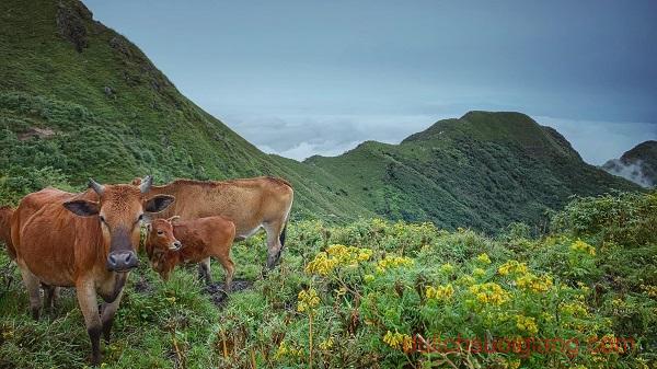 trekking-lung-cung-mucangchai-va-ngam-lua (13)